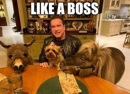 Boss funny memes